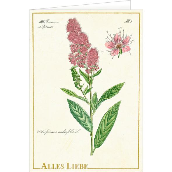 Grußkarten mit Kuvert - Sammlung Augustina